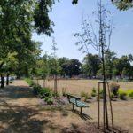 Jana Jaňourová: Stromy v Prostějově si zaslouží větší pozornost